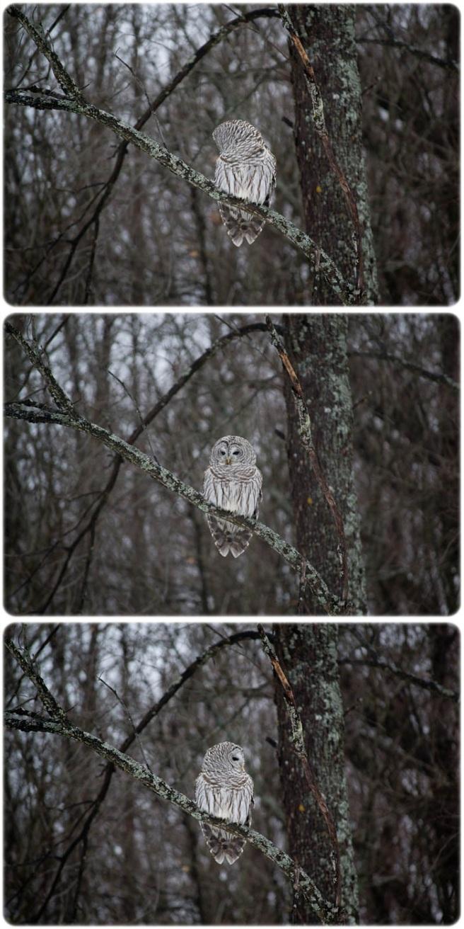 0113_owl