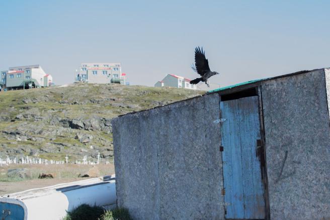 22Aug14_iqaluitwalk6 (1 of 1)